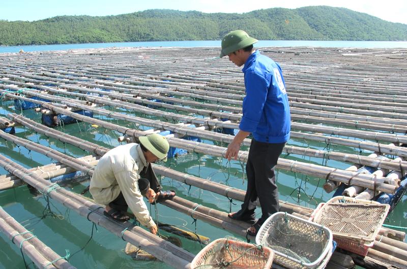 Hóa chất thủy hải sản là gì?