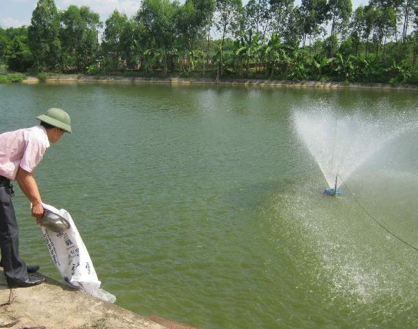 Chlorine được dùng trong chăn nuôi thủy sản